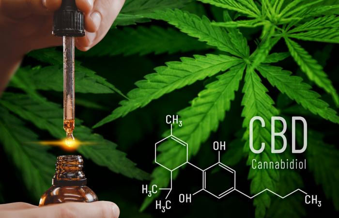 cannabidiol cbd overview